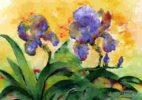 Les iris de mon jardin