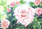 les roses de Jos鑠he